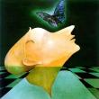 Der letzte Schmetterling * vergrößern