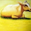 Liegende Kuh * vergrößern