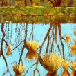 Teich auf dem Naturschutzgelände bei Cyriaxweimar * vergrößern